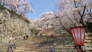0084.岡山県 津山城(鶴山公園)1