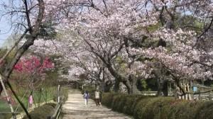 0037. 千葉県 清水公園3