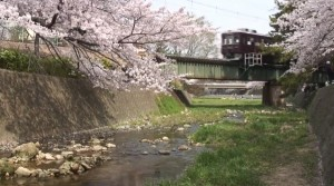 0073.兵庫県 夙川河川敷緑地3