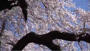 0053.岐阜県 霞間ケ渓公園3