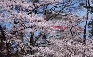 0019.秋田県 千秋公園4