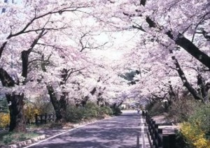 0128.東京都 桜坂2