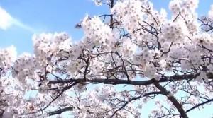 0109.福島県 開成山公園2