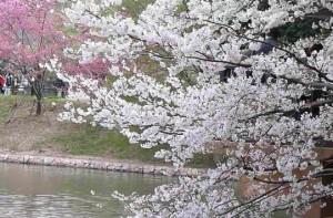 0006.神奈川県 県立三ツ池公園2