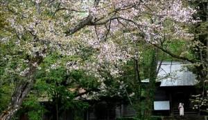 0103.北海道 旭山公園3