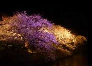 0155.福岡県 舞鶴公園3