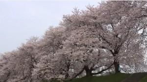 0045.福井県 足羽川・足羽山公園3