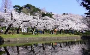 0022.山形県 鶴岡公園2