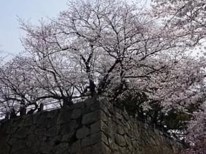 0155.福岡県 舞鶴公園1