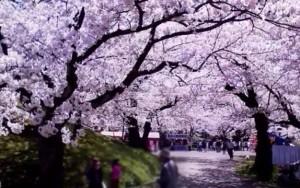0022.山形県 鶴岡公園3