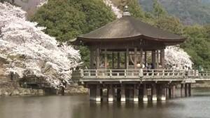 0074.奈良県 奈良公園2