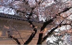 0008.神奈川県 小田原城址公園3