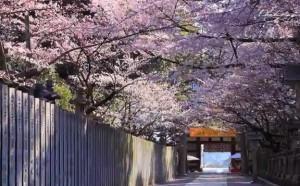0090.香川県 琴弾公園3