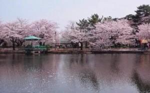 0033.埼玉県 大宮公園3