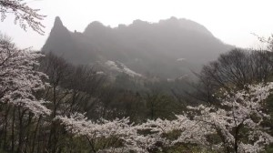 0118.群馬県 妙義山さくらの里3