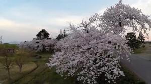 0113.福島県 御殿場公園3