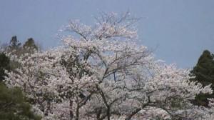 0026.福島県 霞ケ城公園3