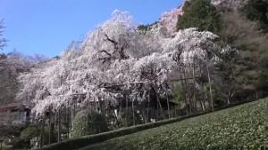 0053.岐阜県 霞間ケ渓公園2