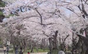 0019.秋田県 千秋公園3