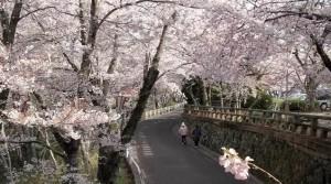 0089.徳島県 西部公園2