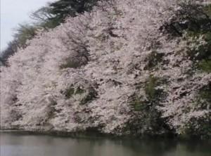 0134.富山県 高岡古城公園2