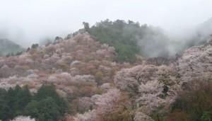 0076.奈良県 吉野山3