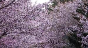 0101.北海道 円山公園2