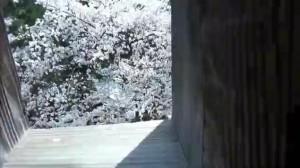 0046.福井県 霞ケ城公園(丸岡城)2