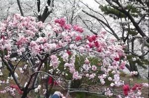 0006.神奈川県 県立三ツ池公園3