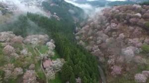 0076.奈良県 吉野山2