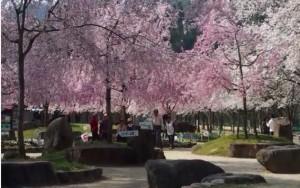 0067.京都府 笠置山自然公園2