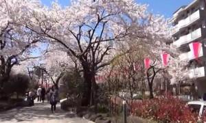 0159.東京都 播磨坂3