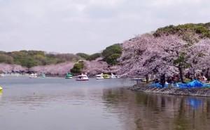 0072.兵庫県 明石公園1