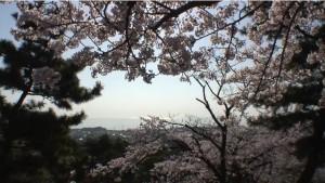 0029.茨城県 かみね公園2