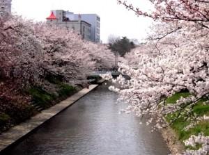 0042.富山県 松川公園3