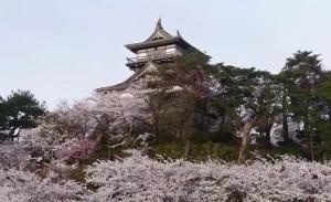 0136.福井県 霞ケ城公園(丸岡城)3