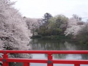 0134.富山県 高岡古城公園3