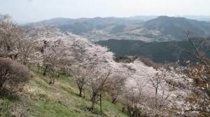 0010.群馬県 桜山公園2