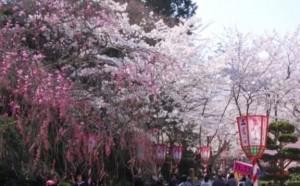 0081.鳥取県 打吹公園3