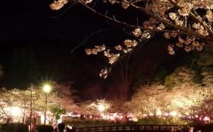 0038.千葉県 茂原公園4